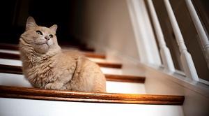 kat op trap
